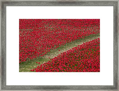 Poppies Of Remembrance Framed Print by Martin Newman