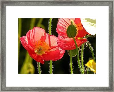 Poppy Framed Print by Diane Greco-Lesser