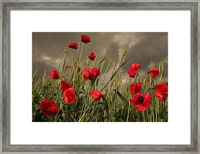 Poppy Field Before The Storm Framed Print by Floriana Barbu