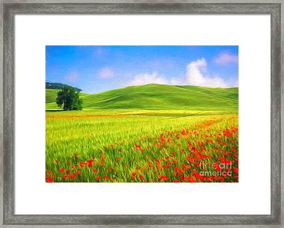 Poppy Field Framed Print by Veikko Suikkanen
