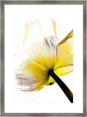 Poppy Flower Art Framed Print by Frank Tschakert