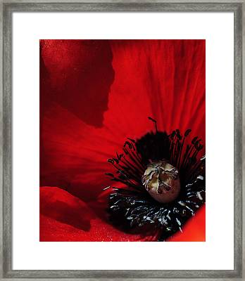 Poppy No. 2 Framed Print by The Forests Edge Photography - Diane Sandoval