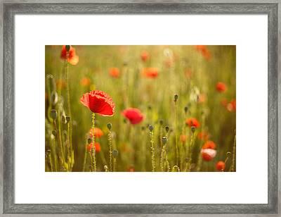 Poppy Party IIi Framed Print by Roeselien Raimond