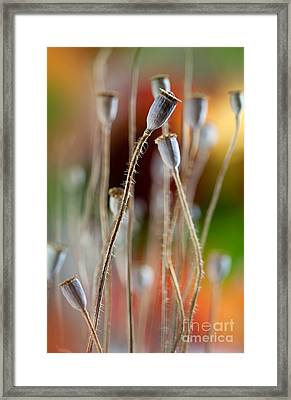 Poppy Pods Framed Print by Nailia Schwarz