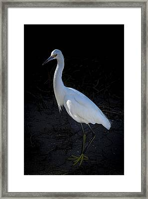 Portrait In White Framed Print by Marvin Spates