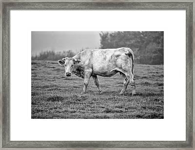 Portrait Of A Cow Framed Print by Nailia Schwarz