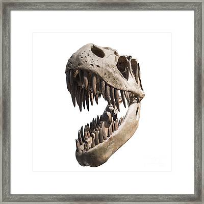 Portrait Of A Dinosaur Skeleton, Isolated On Pure White. Framed Print by Caio Caldas