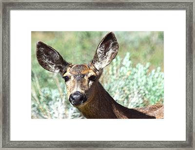 Portrait Of A Doe Framed Print by Frank Wilson