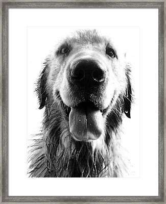 Portrait Of A Happy Dog Framed Print by Osvaldo Hamer