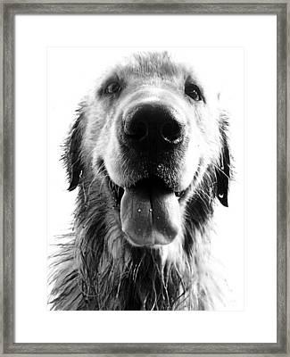 Portrait Of A Happy Dog Framed Print by Osvaldo Hamer