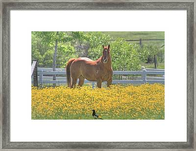 Portrait Of A Quarter Horse Framed Print by Donna Kennedy