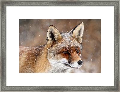 Portrait Of A Red Fox In A Snow Storm Framed Print by Roeselien Raimond