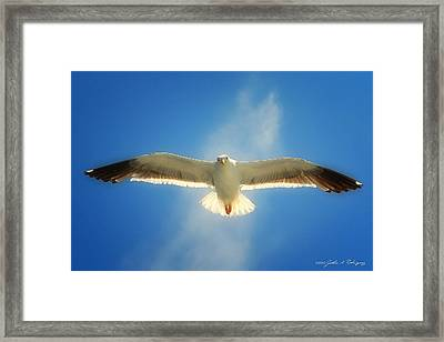 Portrait Of A Seagull Framed Print by John A Rodriguez