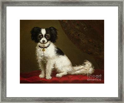 Portrait Of A Spaniel Framed Print by Anonymous