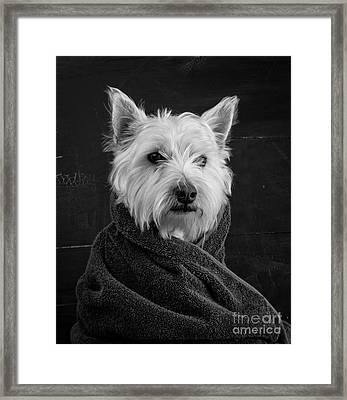Portrait Of A Westie Dog Framed Print by Edward Fielding