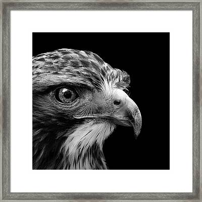 Portrait Of Common Buzzard In Black And White Framed Print by Lukas Holas