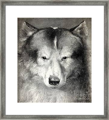 Portrait Of Husky, 1824 Framed Print by Wellcome Images