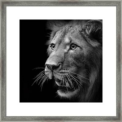 Portrait Of Lion In Black And White II Framed Print by Lukas Holas