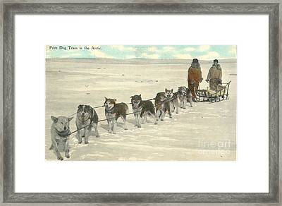 Postal Mail Prize Dog Team In The Arctic 1911 Framed Print by Celestial Images