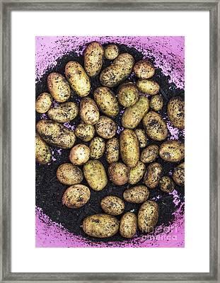 Potato Harvest Framed Print by Tim Gainey