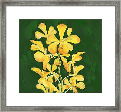 Potted Orchid Framed Print by Plum Ovelgonne