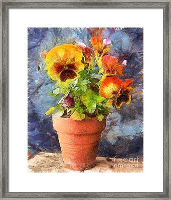 Potted Pansy Pencil Framed Print by Edward Fielding