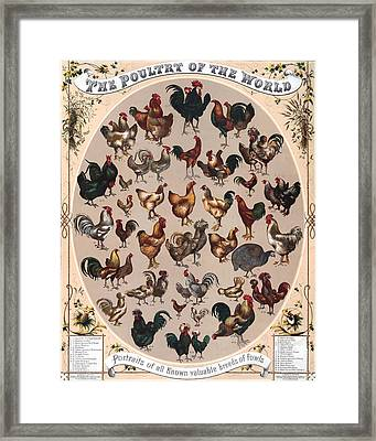 Poultry Of The World Poster Framed Print by American School