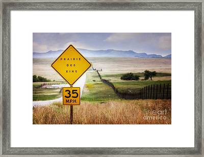 Prairie Dog Crossing Framed Print by Tamyra Ayles