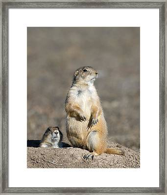 Prairie Dogs On Watch Framed Print by Gary Langley