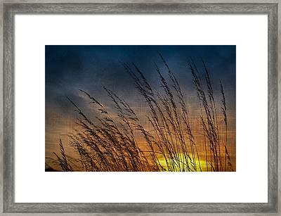 Prairie Grass Sunset Patterns Framed Print by Steve Gadomski