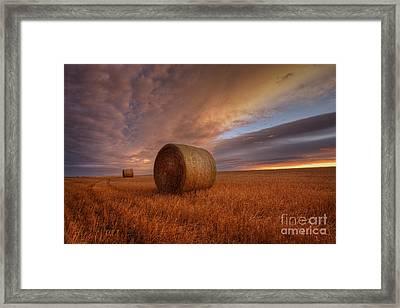 Prairie Harvest Framed Print by Dan Jurak