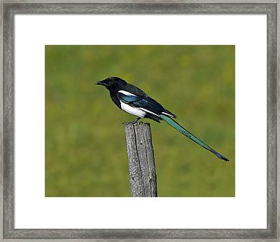 Prairie Perch Framed Print by Tony Beck