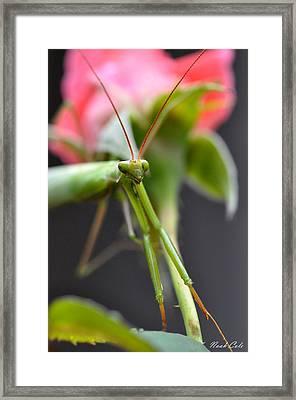 Praying Mantis 3 Framed Print by Noah Cole