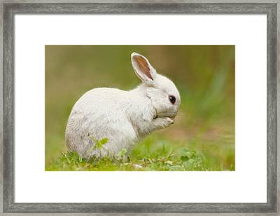 Praying White Rabbit Framed Print by Roeselien Raimond