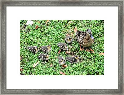 Precious Seven Framed Print by Jan Amiss Photography