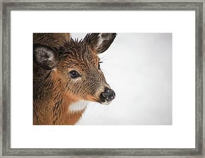 Precious Young Framed Print by Karol Livote