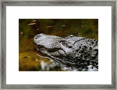 Predator Framed Print by Paul Wash