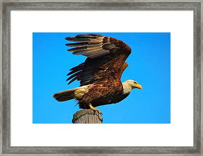Prepare For Take Off Framed Print by Laura Ragland