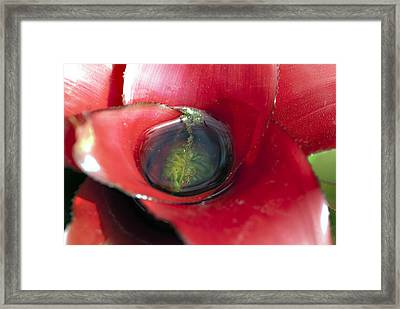 Pretty Bubbles Framed Print by Don  Wright