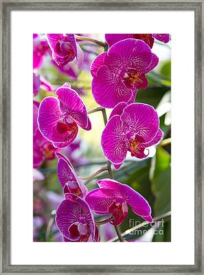 Pretty In Fuchsia Framed Print by A New Focus Photography