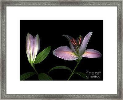 Pretty In Pink Framed Print by Christian Slanec