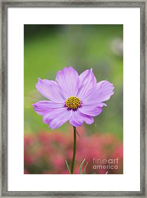 Pretty In Pink Framed Print by Tim Gainey