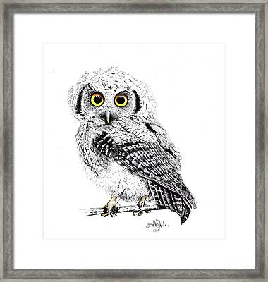 Pretty Little Owl Framed Print by Isabel Salvador
