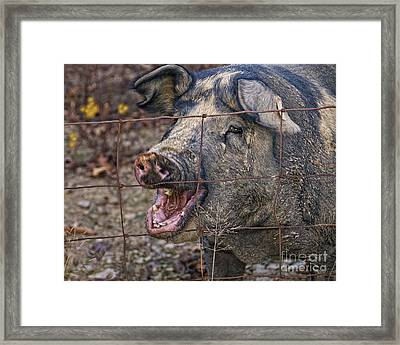 Pretty Pig Framed Print by Timothy Flanigan and Debbie Flanigan at Nature Exposure