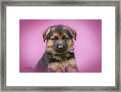 Pretty Puppy Framed Print by Sandy Keeton