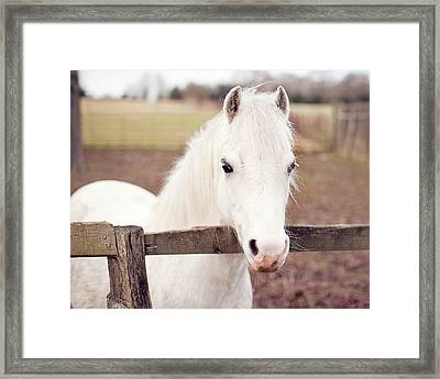 Pretty White Pony Looking Over Fence Framed Print by Sharon Vos-Arnold