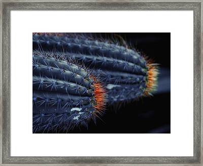 Prickly Hooters Framed Print by Donna Blackhall
