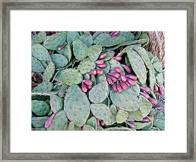 Prickly Pear Cactus Fruits Framed Print by Mother Nature