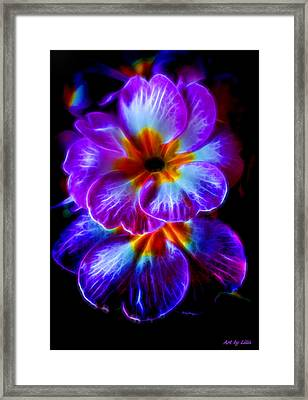 Primrose  Framed Print by Lilia D