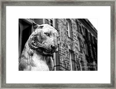 Princeton Tiger Portrait Framed Print by John Rizzuto
